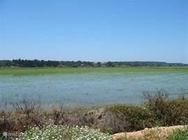 Rijstvelden in de omgeving