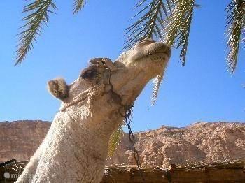 Stel dat ik ziek word in Dahab?