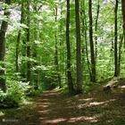 Rendeux 'arboretum van Lenoir'