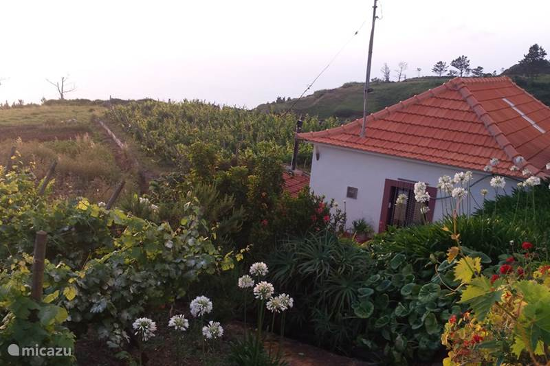 Vakantiehuis Portugal, Madeira, Ponta Do Pargo Vakantiehuis Hortensia