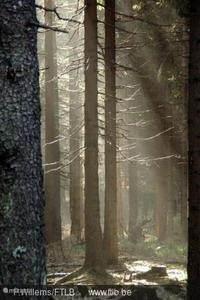 Wander-und Waldpark