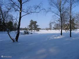 Sneeuw op de hei