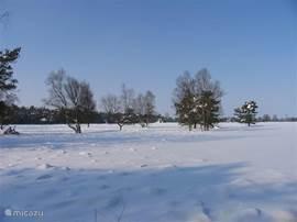 Sneeuw op de hei.