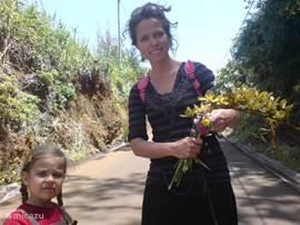bloemeneiland , het hele jaar bloemen zoals orchidee, hortensia, agapantus, aronskelk,bougainvillea