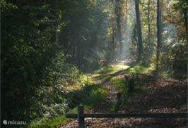 Omgeving - Drents-Friese Wold