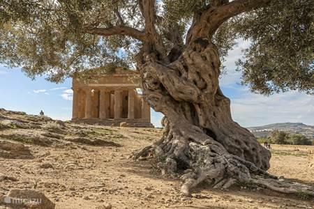 Dagtrips: Agrigento (Valle dei templi)