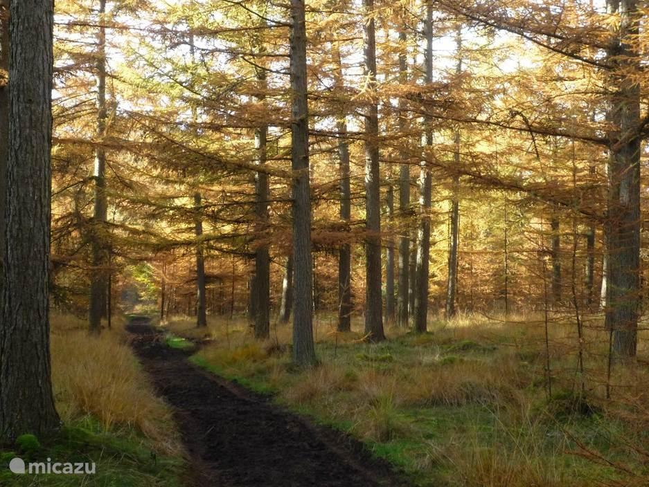 Herfst in het Drents-Friese-Friese Wold;   5 minuten lopen vanaf Zeezicht