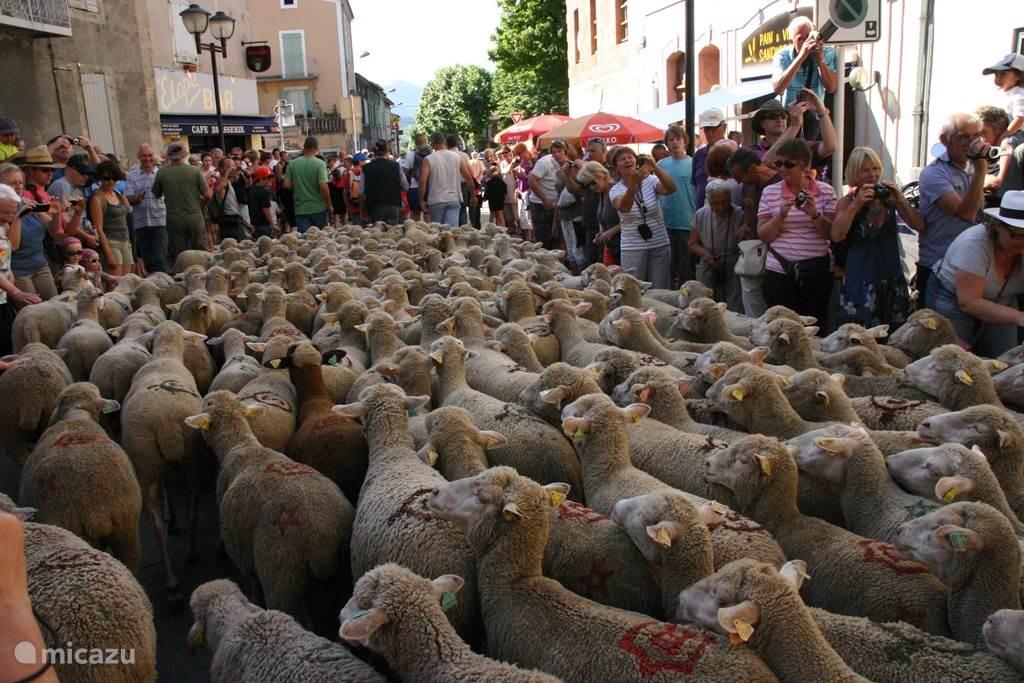 Transhumance in Die. De schapen worden voor de zomer naar de bergen gebracht. Feest in Die