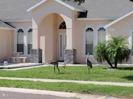 Het nieuwe zitje aan de voorkant van de Villa met de kraanvogels en jong op de voorgrond.