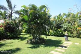 Many tropical trees and plants