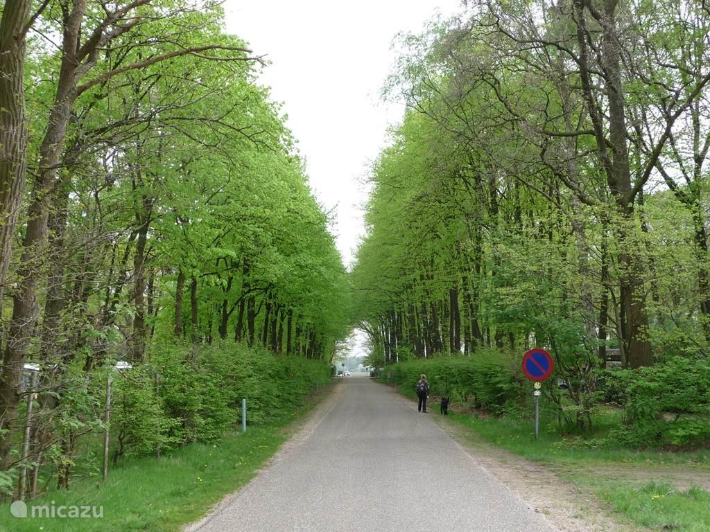 Links van de weg ligt de camping en rechts het bungalowpark.