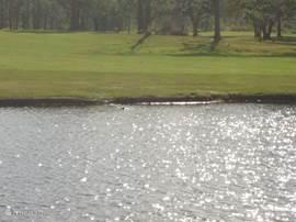 Het meer rondom de golfbaan wat soms bezocht wordt door een krokodil