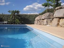 Royaal zwembad in de achtertuin, rondom beschut met hoge hagen, dus privacy gewaarborgd.