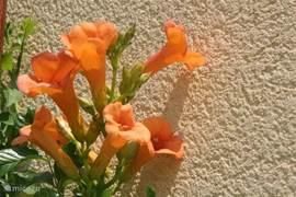 De flora laat je werkelijk VAKANTIE inademen