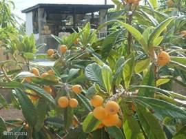 Meer vers fruit zomers uit een van de fruitbomen!