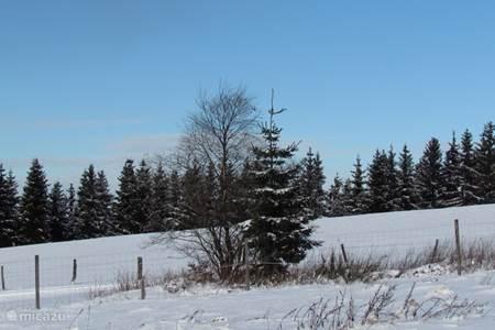 Weerbericht voor Winterberg en omgeving
