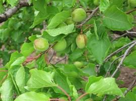 Veel boom- en fruitgaarden in de directe en wijde omgeving.