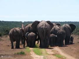 geweldig goede safariparken op twee uur rijden van Hermanus.