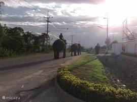 de olifanten lopen regelmatig achter de villa langs