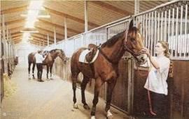 paardrijden en de mogelijkheid uw eigen paard mee te nemen.
