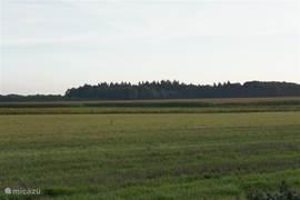 Deze foto zie je een uitgestrekte natuurgebied dat achter het park ligt met zijn akkers en bosgebieden