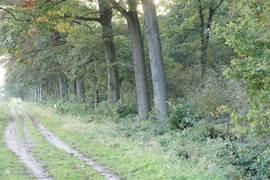 Dit is een deel van het bos achter het park dit is via een hek achterin het park te bereiken. in dit bos zijn ook diverse mountainbike route te vinden en lopen er zins kort ook schotse hoogland koeien.