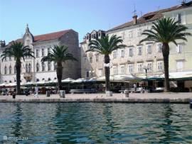 Palmbomen op de boulevard Trogir