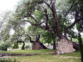 In de Bijbelse tuin Stomorija, Kastela