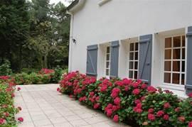 Vanaf juni bloeien de hortensia's uitbundig tot laat in september. Wij proberen ervoor te zorgen dat er gedurende het jaar altijd wel bepaalde planten bloeien. De tuin wordt altijd verzorgd voor u aankomt (gras gemaaid en onkruid gewied) zodat u heerlijk kunt genieten.