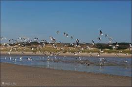 Lekker uitwaaien! In alle jaargetijden heeft het strand iets te bieden.