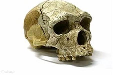 De oudste mens van Europa
