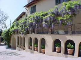 Hortensia's in terracotta vazen leiden u naar de entree van Atelier 2