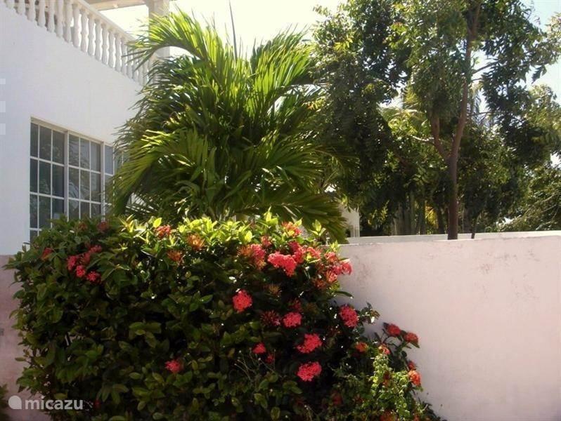 Tropische tuin en terras