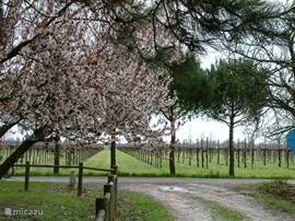 Spring in Pertegada.