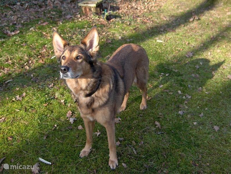 Ideaal voor honden en hun baasjes
