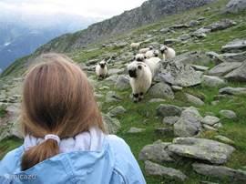 Prachtig wandelgebied, geniet van alle geneugten van de natuur!
