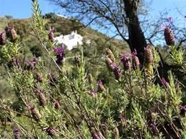 Het zicht op de gehele woning vanaf de overkant van de vallei.  Via de vallei kun je een leuke wandeling maken langs de sinaasappel, amandel-, avocado- en citroenbomen. In het voorjaar staan vele wilde bloemen in bloei wat een schitterend gezicht is.