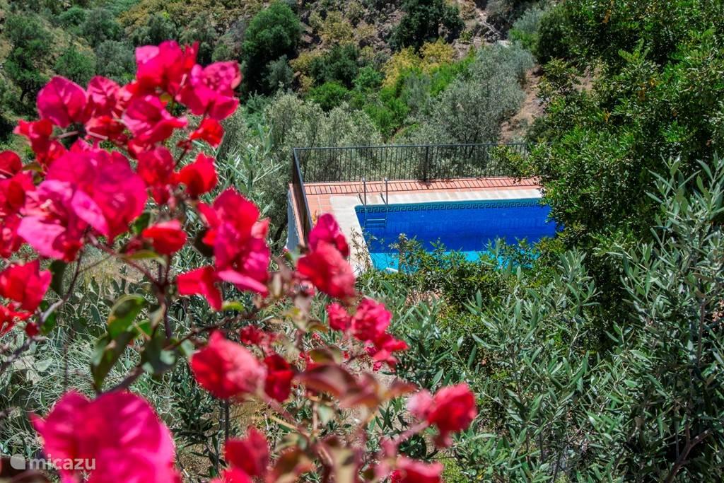 Er is een ruim prive zwembad toegankelijk vanaf het centraal terras en dus vanaf beide wooneenheden toegankelijk.