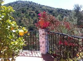 In het voorjaar staan de mooiste bloemen in bloei, zowel in de vallei als op het terras, zodat de zoete geur van o.a. jasmijn je tegemoet komt.  Op ons terras kun je bovendien je eigen limoenen of citroenen plukken! Lekker bij cocktails of visgerechten terwijl de BBQ brandt.