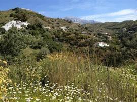 Onze vakantiewoning is 50 minuten vanaf vliegveld Malaga langs de befaamde Spaanse kust de Costa del Sol en gelegen in de bergen van natuurreservaat Sierra Tejeda. Het dichtst bijzijnde strand met boulevard is Torre del Mar en heeft talloze visrestaurants en is ca. 15 minuten rijden