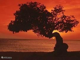 Dagelijkse zonsondergang op loopafstand....