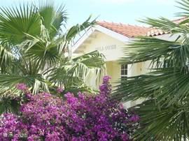 Mooie tuin van Villa Dushi