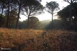 schitterend bos