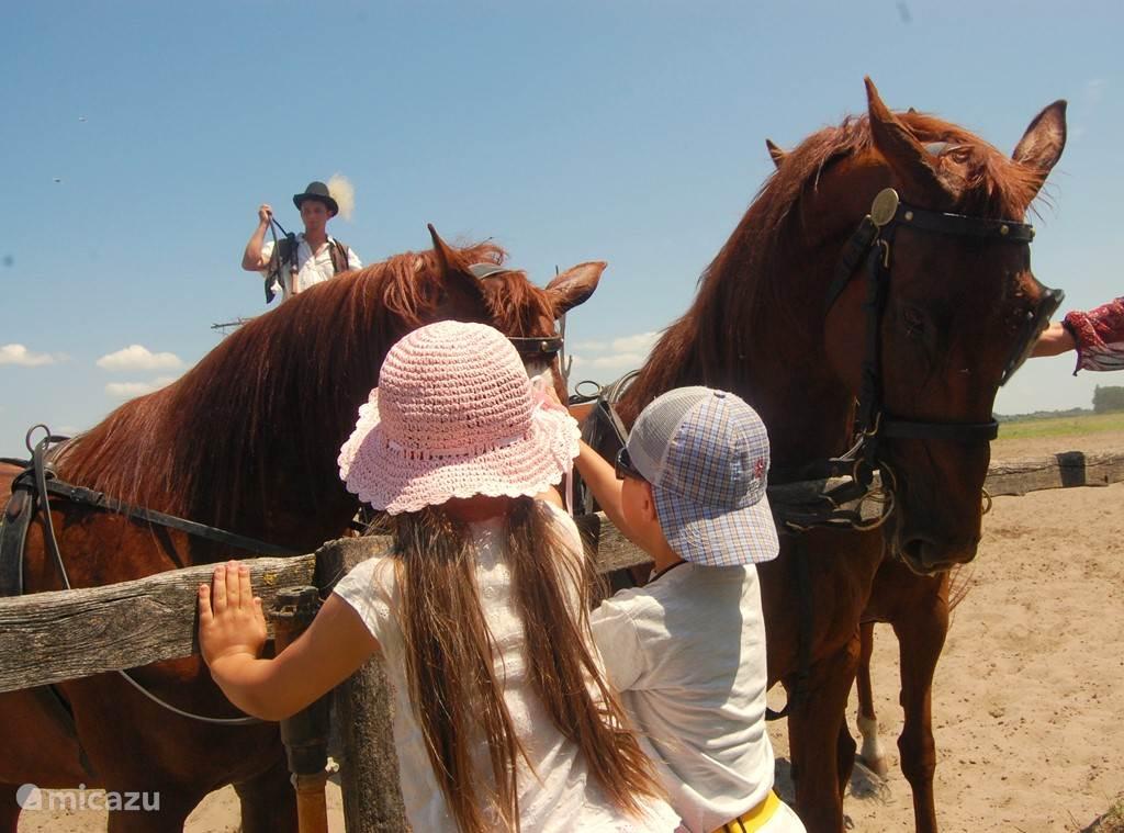 Na de paardenshow krijgen de kinderen volop de gelegenheid om de paarden te aaien.
