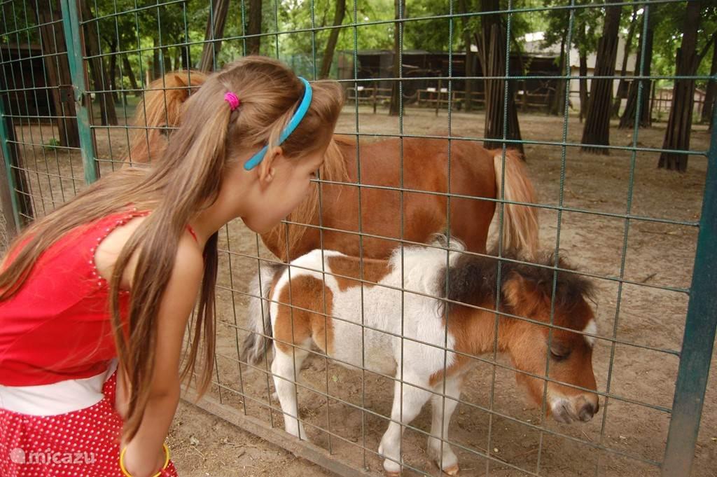 In Kecskemét op ongeveer 25 km vanaf uw vakantieverblijf is een kleine dierentuin. De kinderen vinden het prachtig!