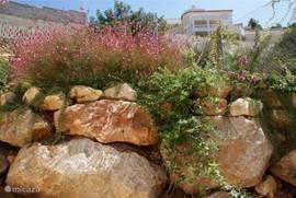 Nog meer tuin