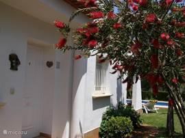 Mooie entree van het huis. U voelt zich gelijk thuis, rust en met heerlijke geuren die zich verspreiden door de natuur om u heen.