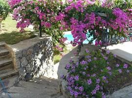 Het appartement bevindt zich op de eerste verdieping. Via een trapje overgroeid met rijkelijk bloeiende Bougainville, bereikt men in een paar stappen het zwembad.