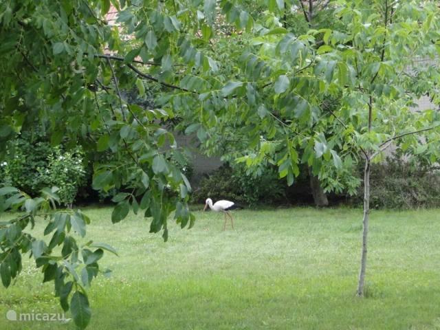 een ooievaar geland in de tuin