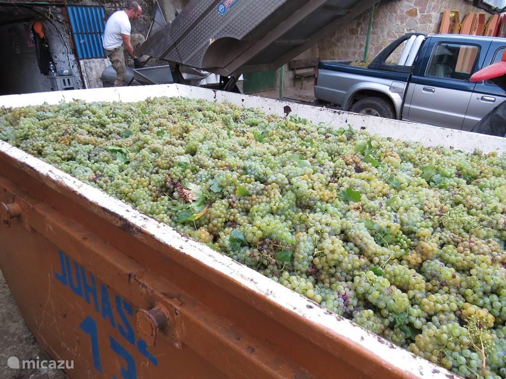 pareltjes van wijn voor een goede prijs